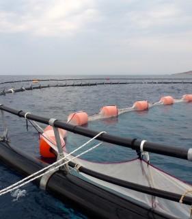 tuna cage4